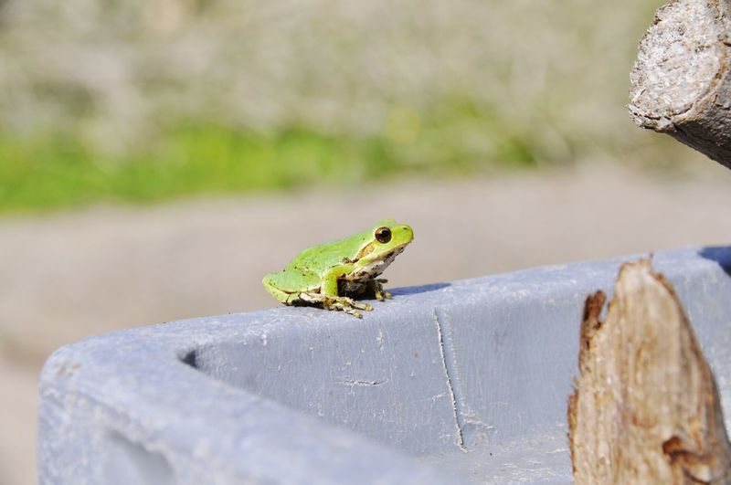 Frog on retaining wall