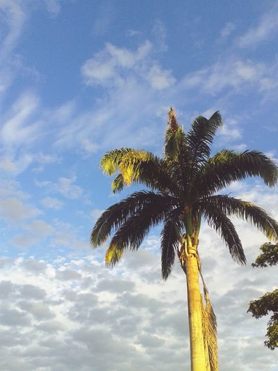 palma Tree Plant Part Tree Trunk Full Length Cloud Computing Copy Space Sky Close-up