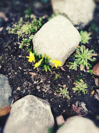 Spring Is Here 🌞 Little Lovely Flowers Nature Warm Outside Love Springtime