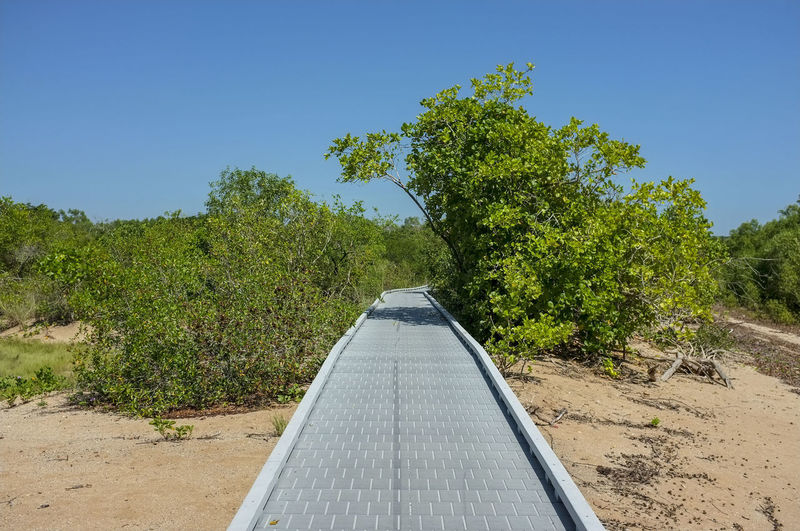 The East Point Mangrove Boardwalk in Darwin, Northern Territory, Australia. Australia East Point Darwin Australia East Point Mangrove Boardwalk East Point Reserve Nature Northern Territory Australia Beauty In Nature Clear Sky Day Diminishing Perspective Direction Green Color Growth Landscape No People Outdoors Sky Sunlight The Way Forward Tranquil Scene Tranquility Tree Tropical Climate Summer Exploratorium The Great Outdoors - 2018 EyeEm Awards