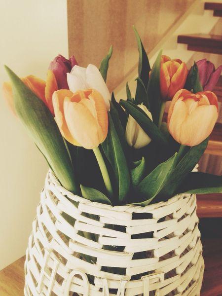 Flowers Spring Love Nice