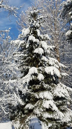 Winter! Beauty In Nature Branch Close-up Cold Temperature Day Growth Nature Outdoors Snow Tranquility Tree Winter