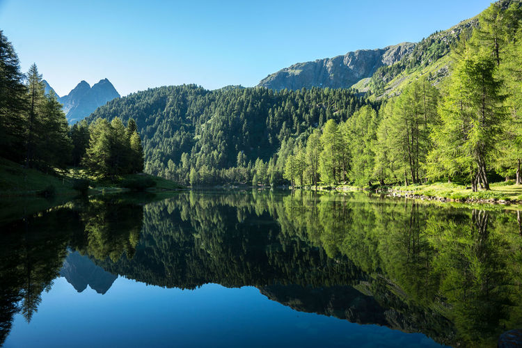 Water Reflection Tranquil Scene Tree Scenics Lake Tranquility Mountain Beauty In Nature Clear Sky Mountain Range Nature Waterfront Non-urban Scene Travel Destinations Majestic Growth Idyllic Blue Green Color