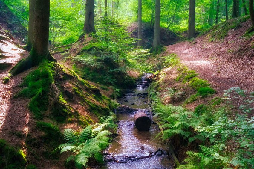 Magical Forest Dreamy Forest Forestwalk Tree Trees Outdoor Photography Outdoors The Great Outdoors - 2016 EyeEm Awards Stream