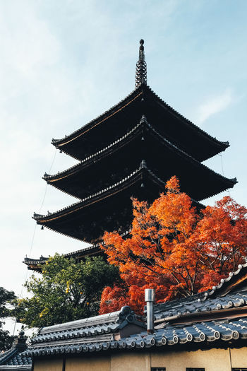 Autumn Architecture Built Structure Low Angle View Tree Sky Building Exterior Plant Religion Nature No People Belief Building Spirituality Roof Place Of Worship Autumn Change Day Outdoors Autumn Autumn colors Autumn Leaves Autumn🍁🍁🍁 Japan Japan Photography It's About The Journey