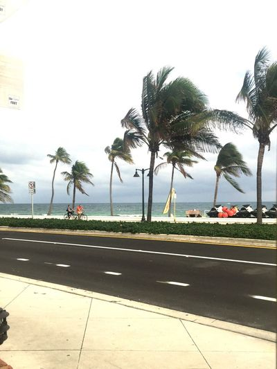 Palm tree swaying in the breeze 🌴 Ft Lauderdale Sidewalk Breeze Palm Trees Lunch View