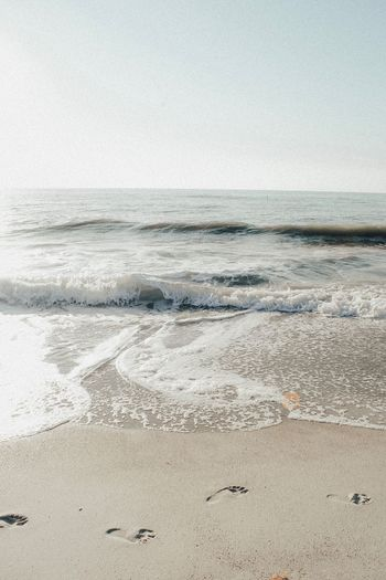 Beach Sea Sand Nature Shore Horizon Over Water Water Beauty In Nature Wave Scenics Day No People Animals In The Wild Tranquility Outdoors Sky Bird Clear Sky EyeEmNewHere
