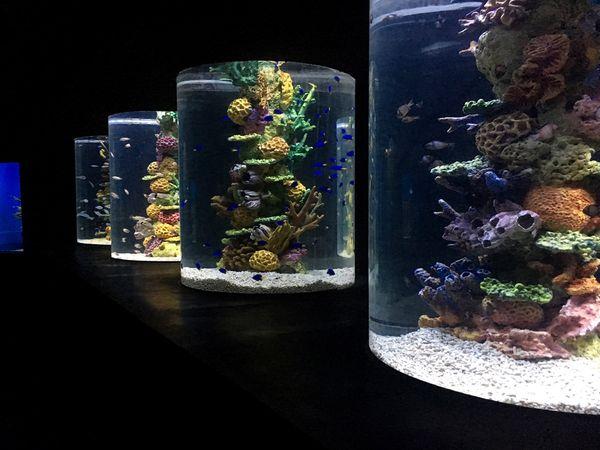 No People Variation Indoors  Close-up Black Background Flower Day Freshness Fish Aquarium