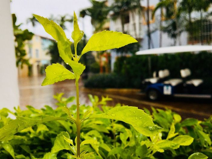 Greens Leaf Plant Part Growth Plant Green Color Nature EyeEmNewHere Close-up Day Beauty In Nature Outdoors Fragility Freshness Vulnerability  Water Plant Stem Focus On Foreground