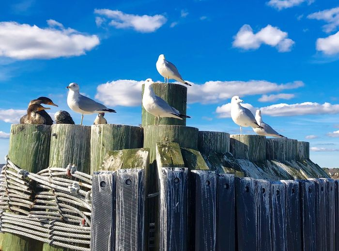 Ferry Views Dockside View Blue Sky Seagulls Birds Animal Themes Animals In The Wild Perching Animal Wildlife Cloud - Sky Sky Day Low Angle View Outdoors Wooden Post No People Nature