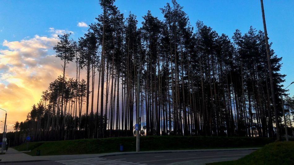 Tree Sky Outdoors Beauty In Nature Cloud - Sky No People Sunset Nature Blue Growth Day City Adult Human Back Real People Leisure Activity Casual Clothing Full Length Girls Child Childhood Indoors  Friendship Beauty In Nature Tree