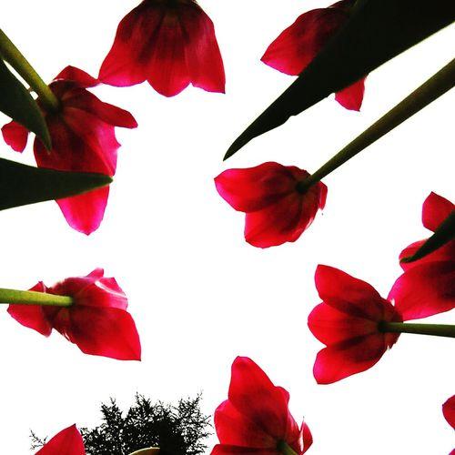 küçük canlıların güzünden dünyaya bakmak/ to look at the world throug the eyes of small creatures Look At The World Through The Eyes Of Small Creatures Lale Lale Zamani Tulipfestival Kırmızı Tulips Red Red Tulips Red Tulip Tulip Festival Tulip Tulips TimeTulips🌷 Tulip Love Tulips Flowers Konyadan Konyainstagram Konyagram Konya Konya Turkey Konya Meram Nerede Necmettin Erbakan Üniversitesi Necmettinerbakanüniversitesi akef Egitimfakultesi yanı