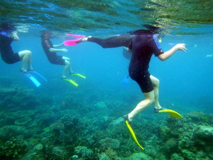 Snorkeling Great Barrier Reef Australia Underwater Water Sea Swimming UnderSea Nature Adventure Diving Equipment Sport Exploration Animal Wildlife Full Length Leisure Activity Aquatic Sport Animal Sea Life Diving Flipper Animal Themes Day Outdoors Marine Underwater Diving