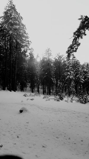 California It's Cold Outside Winter Wonderland Winter Trees Blackandwhite Photography Black And White Collection