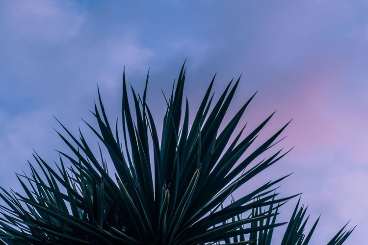 Neon evening, Jan 2018 Neon Vaporwave Colorful Tree Sky Close-up Cloud - Sky Palm Tree Frond Resort Dramatic Sky Atmospheric Mood