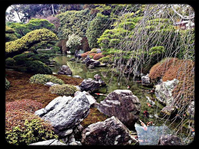 城南宮 神苑「室町の庭」 Garden The Purist (no Edit, No Filter) Taking Photos IPhoneography
