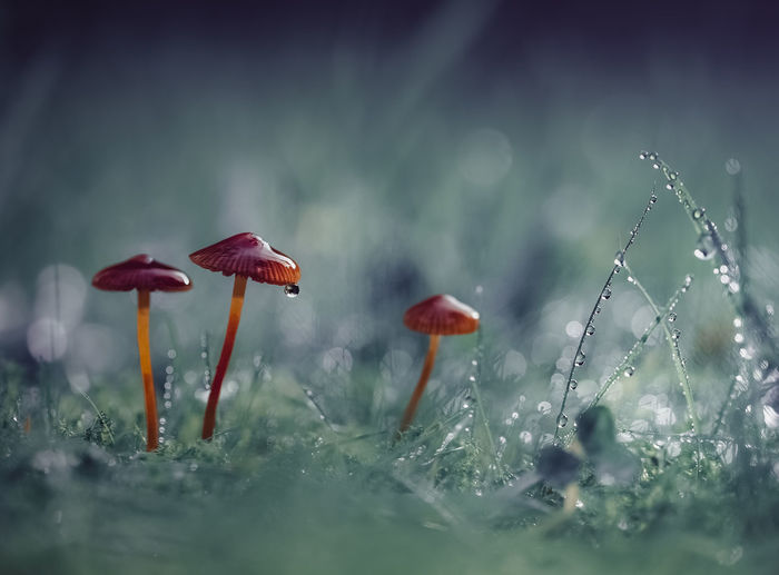 Close-Up Of Mushrooms Growing On Field During Rainy Season