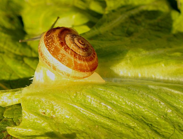 Every living creature will make it by following his own path Snail Nature Taking Photos Enjoying Life Relaxing EyeEm Nature Lover EyeEm Best Shots Macro Green On The Road