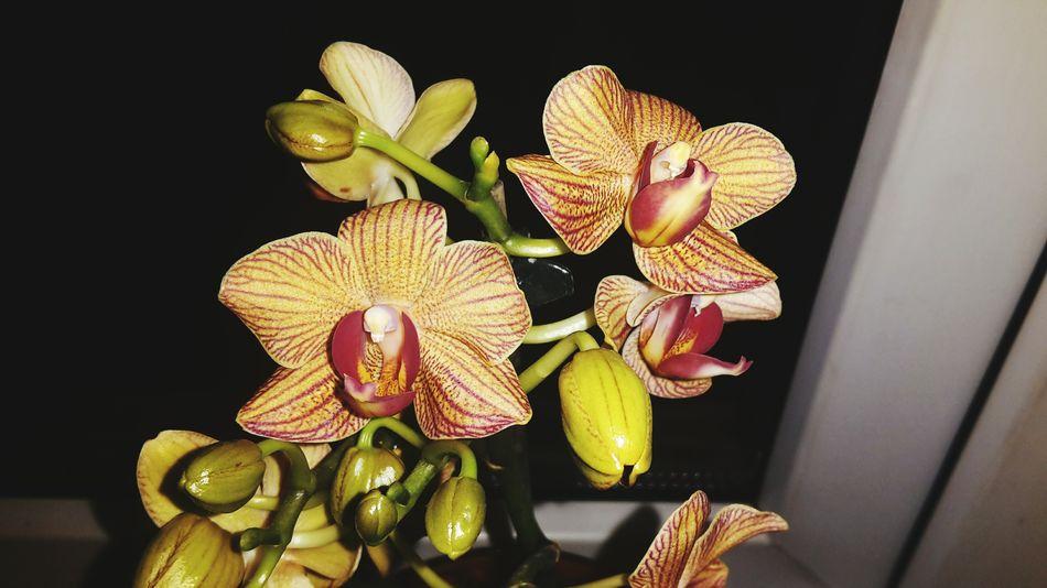 Orchids Flower Exotic Exotic Flowers Showcase: April