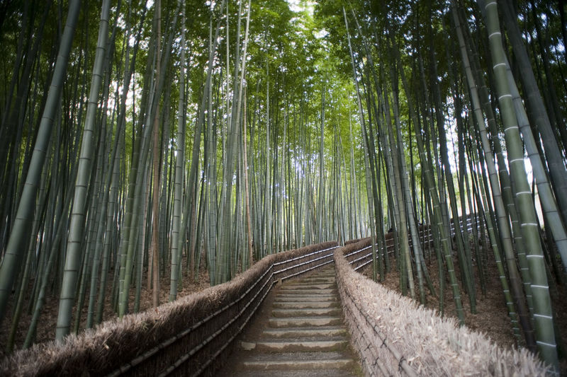 Bamboo walk Adashino Nembutsu-ji Temple, Kyoto, Japan with steps leading up to the temple through a cultivated plantation of bamboo, a popular tourist destination Adashino-nenbutsu-ji Atmostpheric Bamboo Beautiful Calming Forest Japan Kyoto Nature Outdoors Path Peaceful Scenic Staircase Stairs Steps Temple Trail Tranquility
