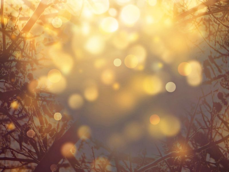dreaming... Missing You Naturelove For My Friends😚 Sunny Day Keep The Fire Burning Expression Artistique Bokehlicious Lucky Me🦄 Defocused Nature Tree Selective Focus Plant Leaf Autumn Sunlight Illuminated
