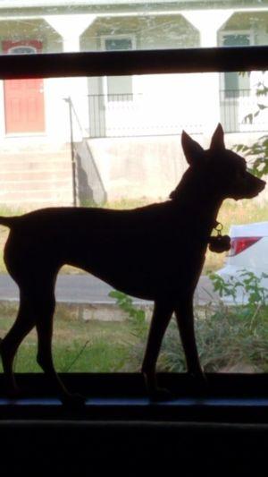 Sillouette Dogs