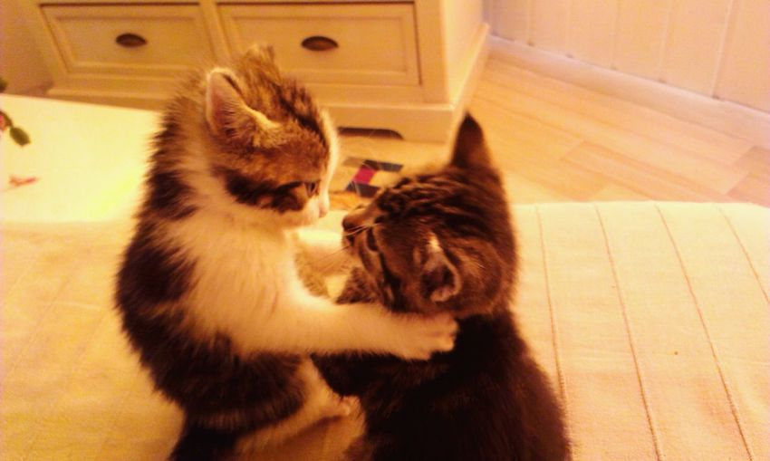 Cats Hug Cute Pets Nice Moment Love ♥