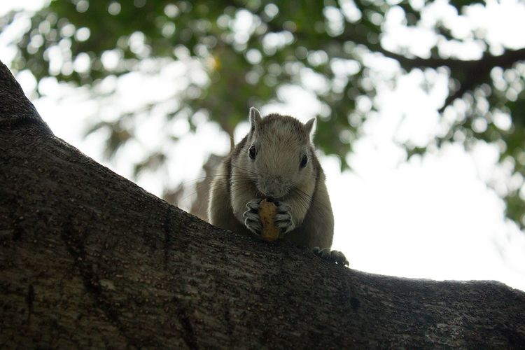 Low angle view of squirrel