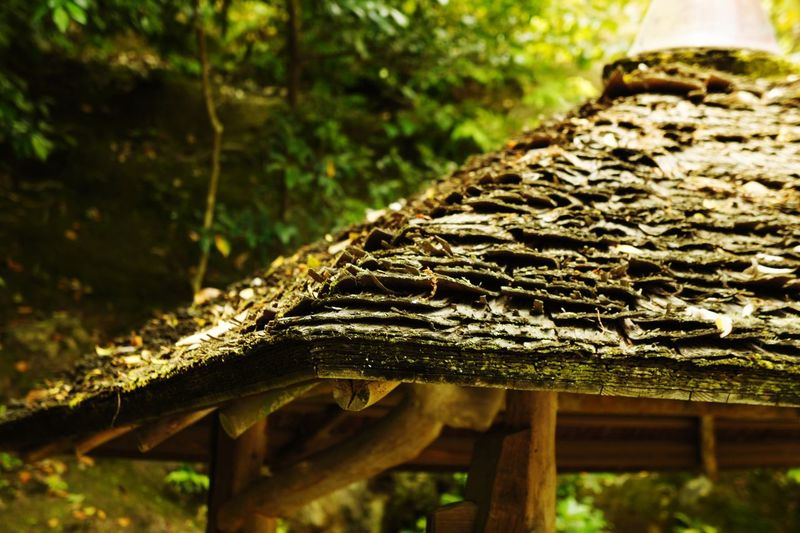 Nature Outdoors tarditional Japanese style roof EyeEmNewHere The Architect - 2018 EyeEm Awards