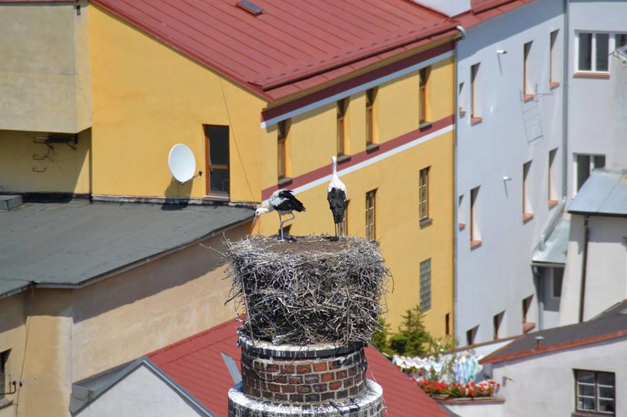 architecture, building exterior, built structure, no people, roof, outdoors, day, animal themes, bird
