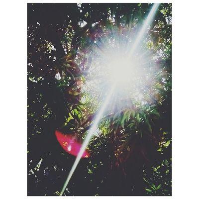 Glare from a Bright Light! ☀ Goodmorning Sun Mangotree