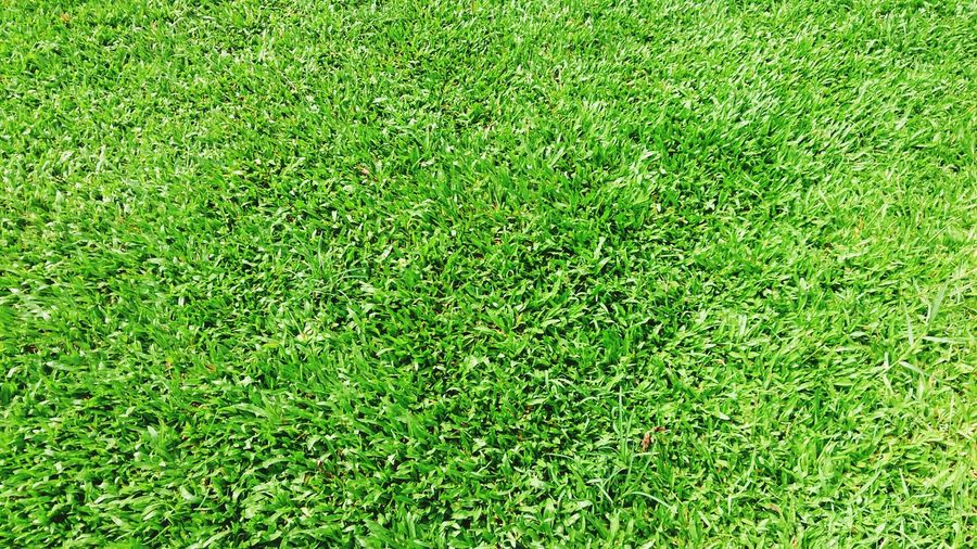 Soccer Field Playing Field Backgrounds Full Frame Green - Golf Course Golf Course American Football - Sport Grass Area American Football Field Sport Grassland Greenery Blossoming  Vegetation Grass Family Green Blooming Countryside