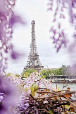 Paris Tree City Defocused Flower Winter Cold Temperature History Cultures Tower Branch