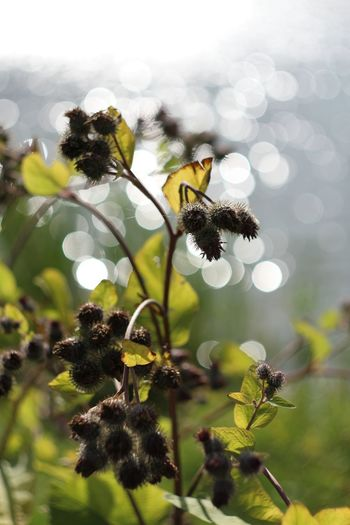 Bokeh Bokeh Photography Creative Light And Shadow Nature Plant River Water