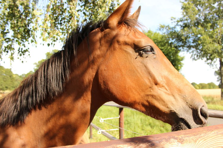 First time on LIVE!!! Childhood Family Farm Herbivorous Horse Kinder Mammal Pferd Schatten Sunny Day Tierfotografie Zoology The Week On EyeEm