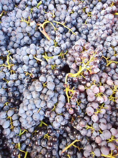 High angle view of grapes growing on plant