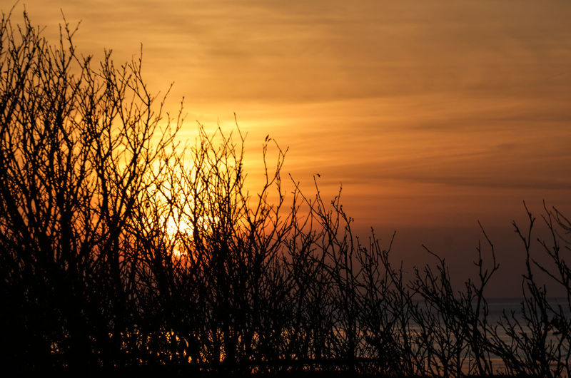 Beach Photography Beauty In Nature Close-up Grass Growth Hoffi99 Lower Saxony Nature No People North Sea Coast North Sea Region Orange Color Outdoors Plant Scenics Silhouette Sky Sun Sundown Sunset Tranquil Scene Tranquility Water