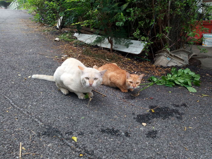 High angle view of two cats