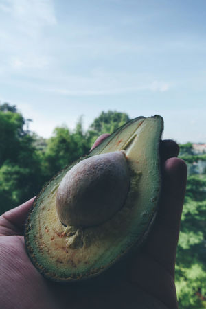 Human Body Part Focus On Foreground One Person People Human Hand Close-up Avocado Fruit