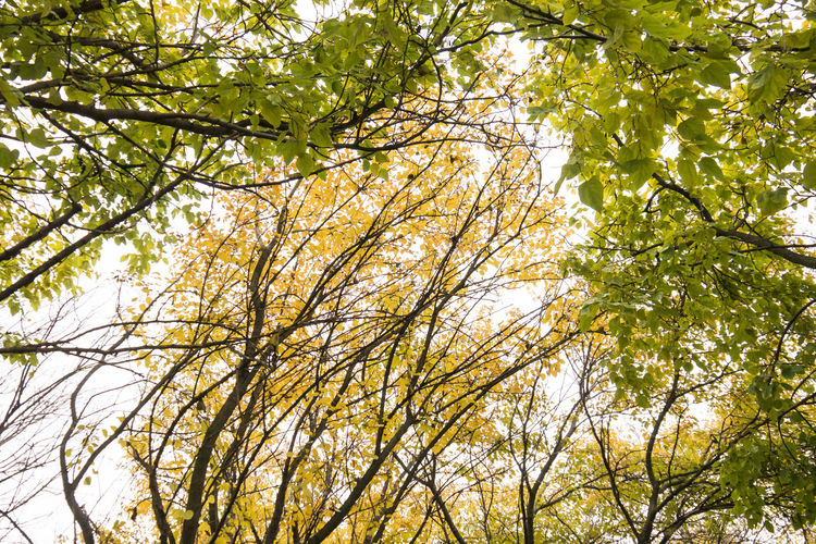 Trees of protection Autumn Beauty In Nature Branch Calmness Day Deciduous Tree Forest Freshness Green Green Color Growth Leaf Low Angle View Nature No People Outdoors Scenics Sky Tranquility Tree Perspectives On Nature