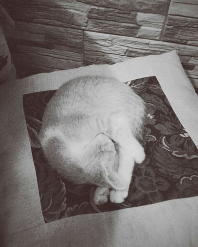 Cat Catlover Animal Photography Thisisnotmycat Animal Love Pets Pets Corner Sleeping Cat Cute Pets Cute Cat