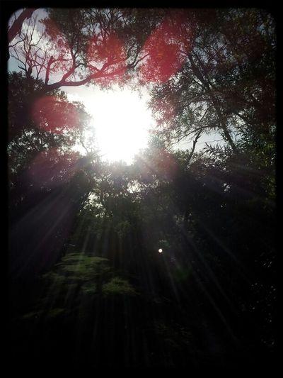 Nature Light Trees Sunlight Park Hawaii