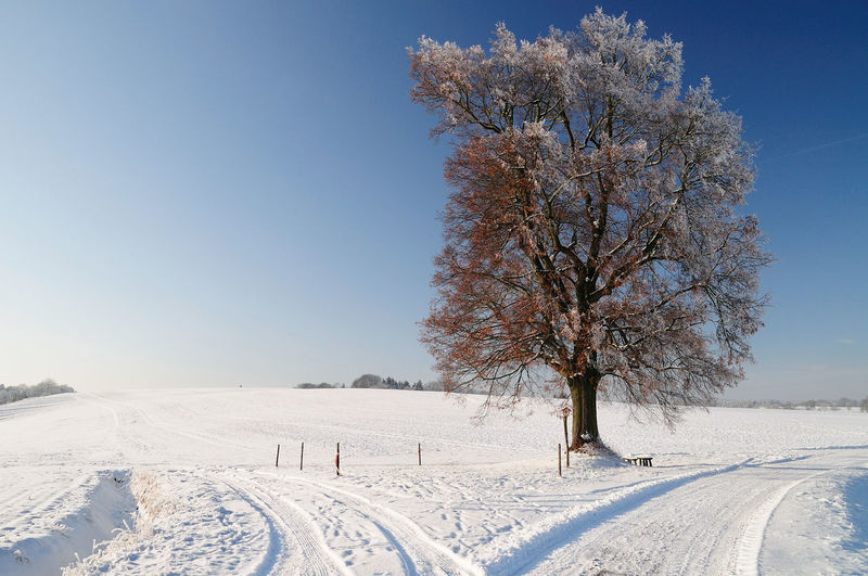 Winter Tree German Tree Winter Winter Road Beauty In Nature Blue Branch Clear Sky Cold Temperature Crossing Crossroad Crossroads Landscape Oak Oak Tree Outdoors Single Tree Snow Tranquil Scene Tranquility Tree Winter Winter Tree Winter Trees Winter Trees ❄⛄