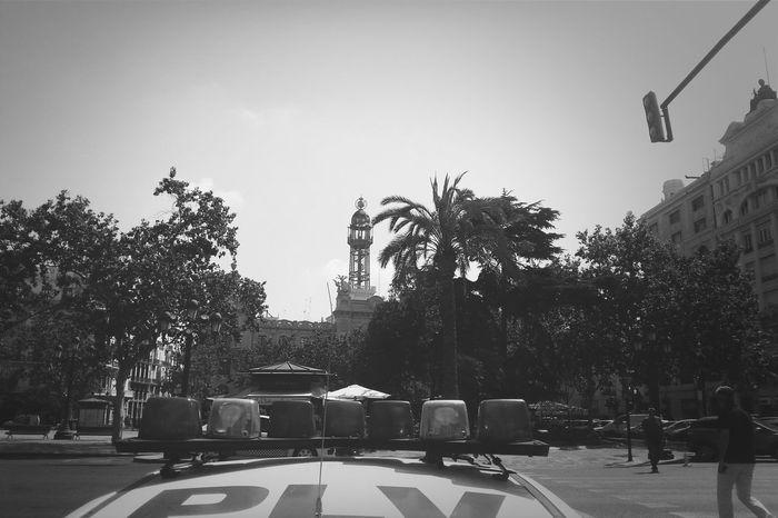 SPAIN Place València Palmiers