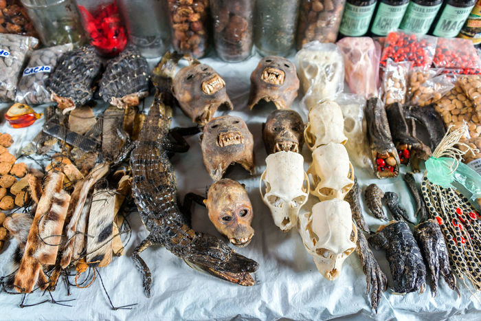 IQUITOS, PERU - MARCH 17: Animal skulls for sale in Belen Market in Iquitos, Peru on March 17, 2015 Amazon Amazonas Amazonian Belén Brazil City Destination Exotic Feet HEAD Iquitos  Iquitos, Perú Market Marketplace Medicinal Monkey Nature Peru Peruvian Port South America Traditional Travel Tropical View