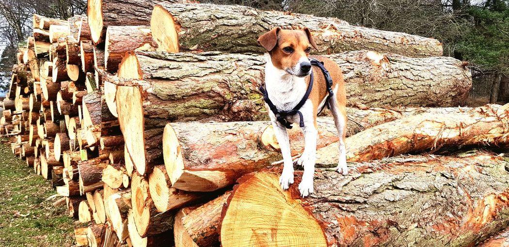 logging today.