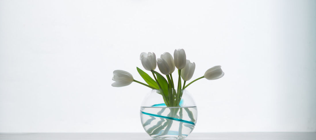 Flowers Accent Flowers Highlight Still Life Still Light Space Vase White White Tulips