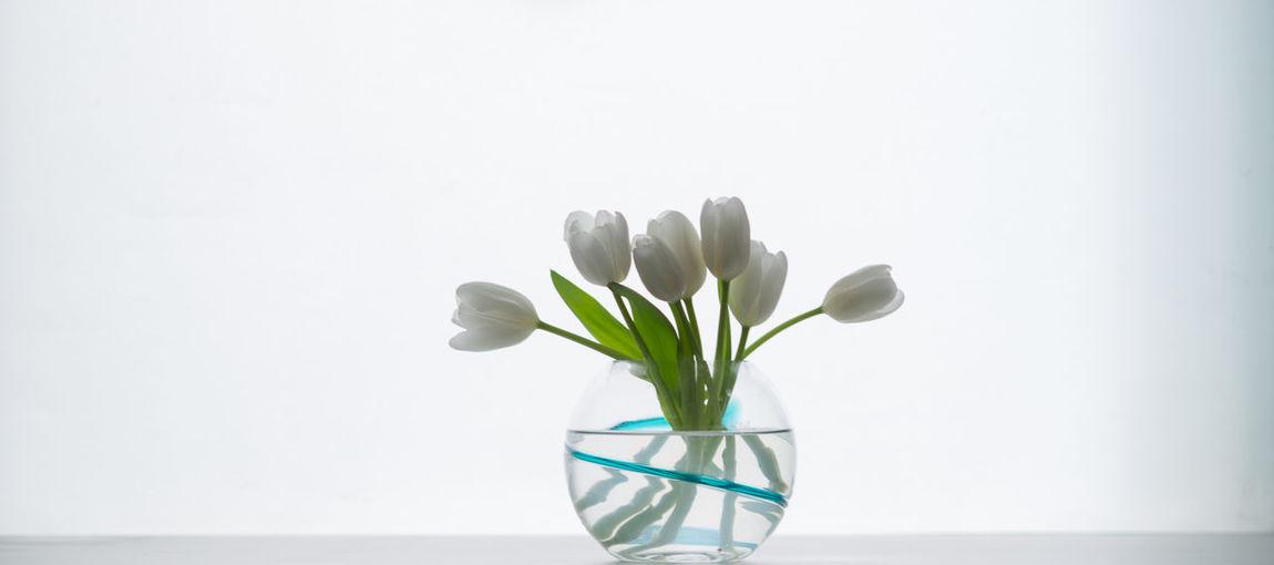 Flowers Accent Flowers Highlight Still Life Still Light Space Vase White White Tulips