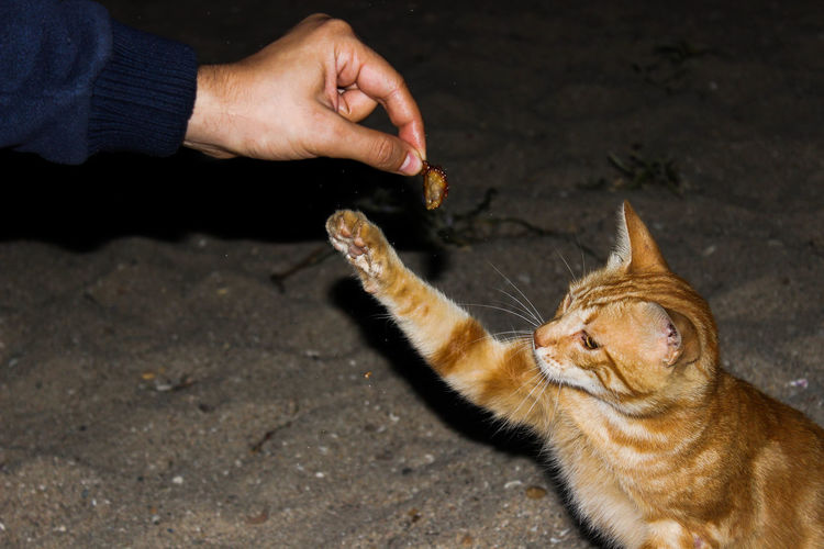 Close-Up Of Hand Feeding Cat Outdoors