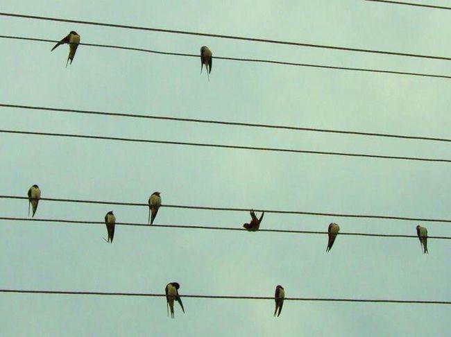 Bird notes. .. Eye4photography  EyeEm Birds Eye 4 Music Nature_collection